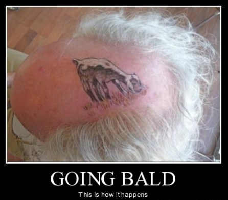 Funny bald man pictures people