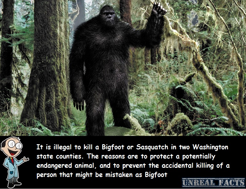is it illegal to kill a sasquatch in bc