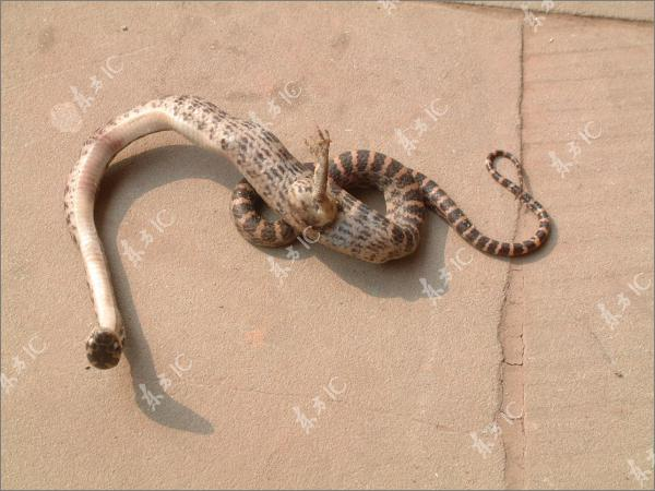 Snake Was Found With A Fully Formed Leg In China
