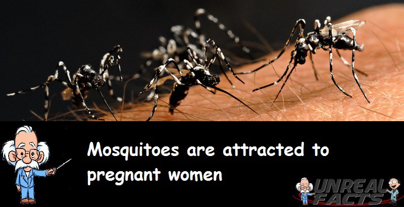 Mosquitoes Attracted to Pregnant